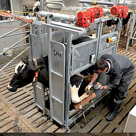 Lely Treatment Box Behandlungsbox